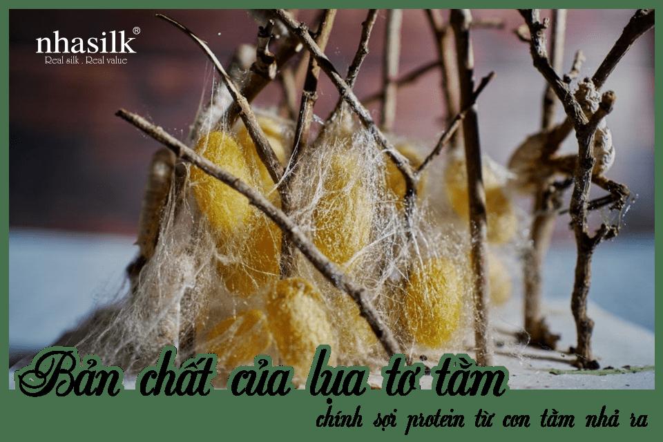 Bản chất của lụa tơ tằm chính sợi protein từ con tằm nhả ra.